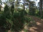 08 - Kleiner Waldweg