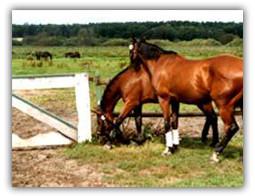 Lübars Pferdehaltung